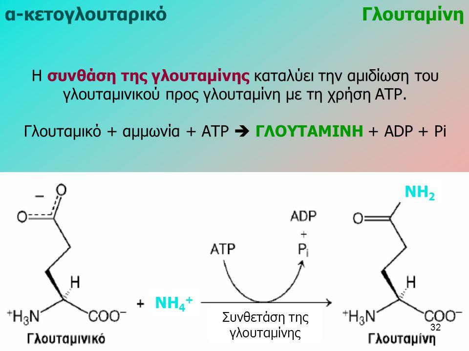 Η συνθάση της γλουταμίνης καταλύει την αμιδίωση του γλουταμινικού προς γλουταμίνη με τη χρήση ΑΤΡ. Γλουταμικό + αμμωνία + ΑΤΡ  ΓΛΟΥΤΑΜΙΝΗ + ADP + Pi