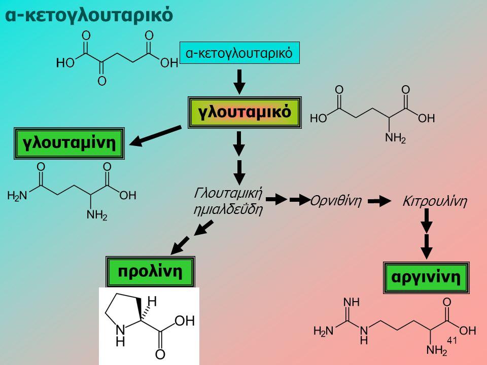 α-κετογλουταρικό γλουταμικό γλουταμίνη προλίνη αργινίνη Γλουταμική ημιαλδεΰδη Ορνιθίνη Κιτρουλίνη α-κετογλουταρικό 41