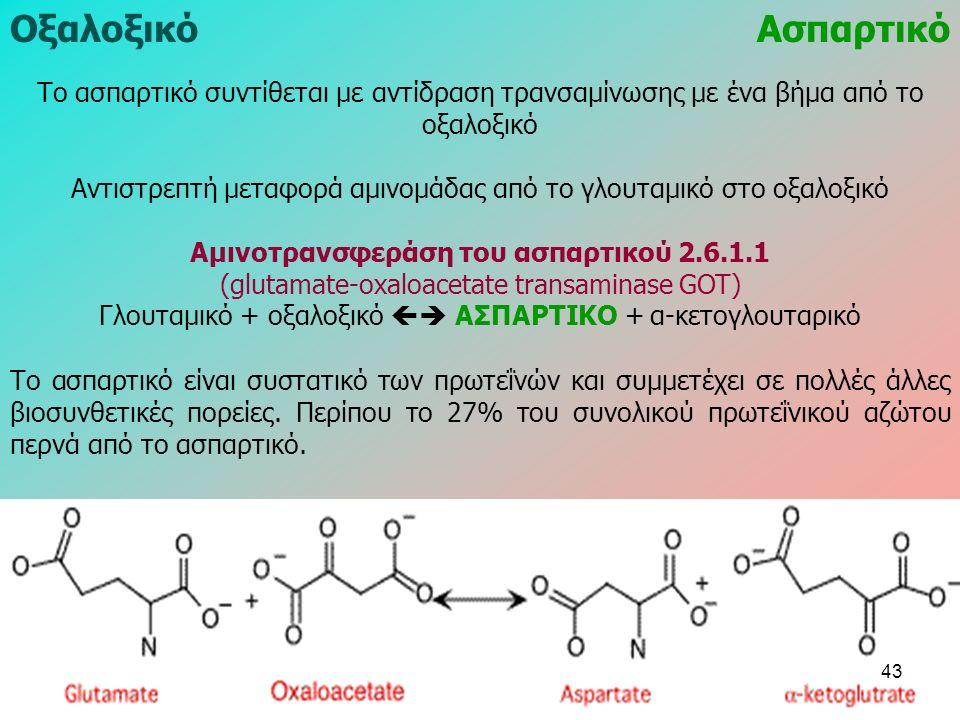 ΟξαλοξικόΑσπαρτικό Το ασπαρτικό συντίθεται με αντίδραση τρανσαμίνωσης με ένα βήμα από το οξαλοξικό Αντιστρεπτή μεταφορά αμινομάδας από το γλουταμικό στο οξαλοξικό Αμινοτρανσφεράση του ασπαρτικού 2.6.1.1 (glutamate-oxaloacetate transaminase GOT) Γλουταμικό + οξαλοξικό  ΑΣΠΑΡΤΙΚΟ + α-κετογλουταρικό Το ασπαρτικό είναι συστατικό των πρωτεΐνών και συμμετέχει σε πολλές άλλες βιοσυνθετικές πορείες.