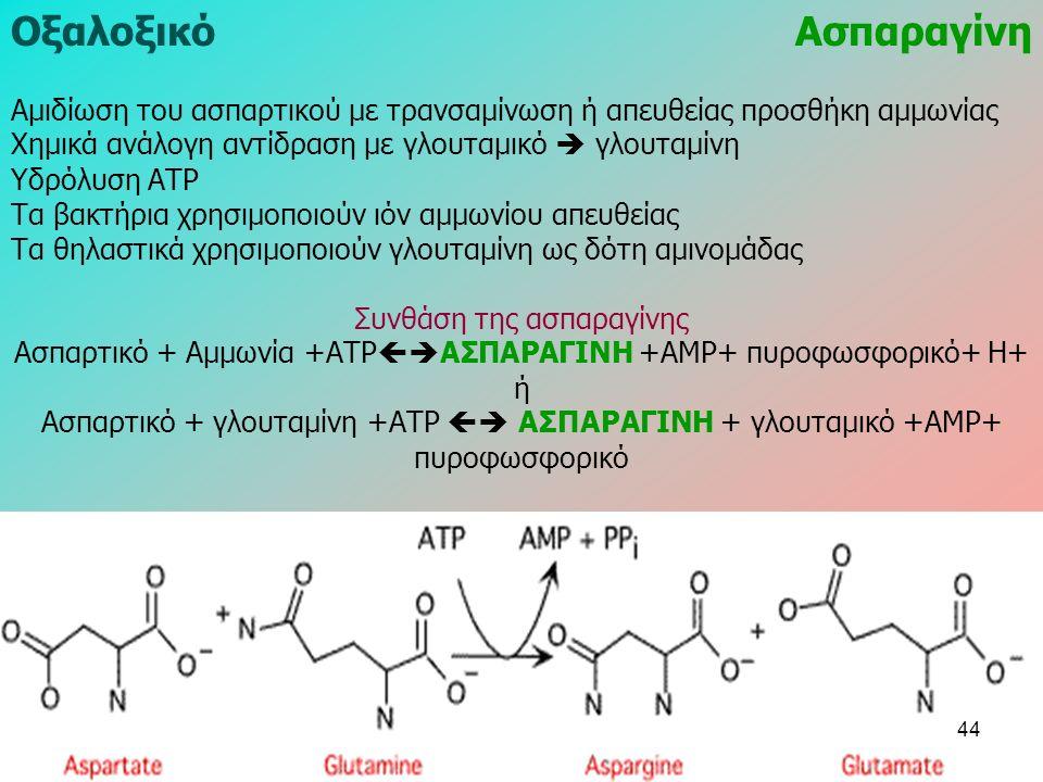 ΟξαλοξικόΑσπαραγίνη Αμιδίωση του ασπαρτικού με τρανσαμίνωση ή απευθείας προσθήκη αμμωνίας Χημικά ανάλογη αντίδραση με γλουταμικό  γλουταμίνη Υδρόλυση ΑΤΡ Τα βακτήρια χρησιμοποιούν ιόν αμμωνίου απευθείας Τα θηλαστικά χρησιμοποιούν γλουταμίνη ως δότη αμινομάδας Συνθάση της ασπαραγίνης Ασπαρτικό + Αμμωνία +ΑΤΡ  ΑΣΠΑΡΑΓΙΝΗ +ΑΜΡ+ πυροφωσφορικό+ Η+ ή Ασπαρτικό + γλουταμίνη +ΑΤΡ  ΑΣΠΑΡΑΓΙΝΗ + γλουταμικό +ΑΜΡ+ πυροφωσφορικό 44