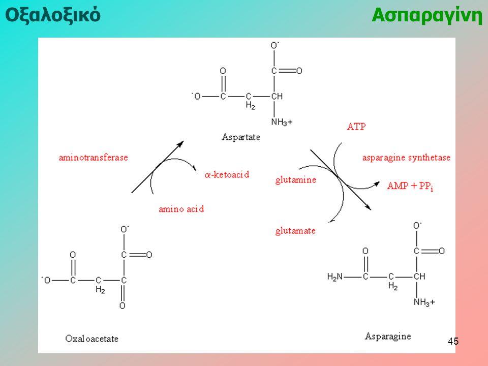 ΟξαλοξικόΑσπαραγίνη 45