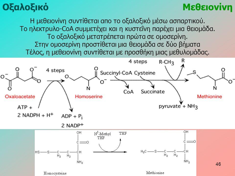ΟξαλοξικόΜεθειονίνη Η μεθειονίνη συντίθεται απο το οξαλοξικό μέσω ασπαρτικού. Το ηλεκτρυλο-CoA συμμετέχει και η κυστεΐνη παρέχει μια θειομάδα. Το οξαλ