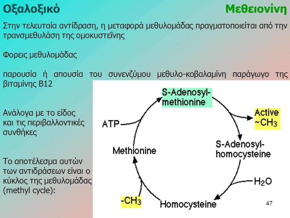 Στην τελευταία αντίδραση, η μεταφορά μεθυλομάδας πραγματοποιείται από την τρανσμεθυλάση της ομοκυστεΐνης Φορεις μεθυλομάδας παρουσία ή απουσία του συνενζύμου μεθυλο-κοβαλαμίνη παράγωγο της βιταμίνης Β12 Ανάλογα με το είδος και τις περιβαλλοντικές συνθήκες Το αποτέλεσμα αυτών των αντιδράσεων είναι ο κύκλος της μεθυλομάδας (methyl cycle): ΟξαλοξικόΜεθειονίνη 47