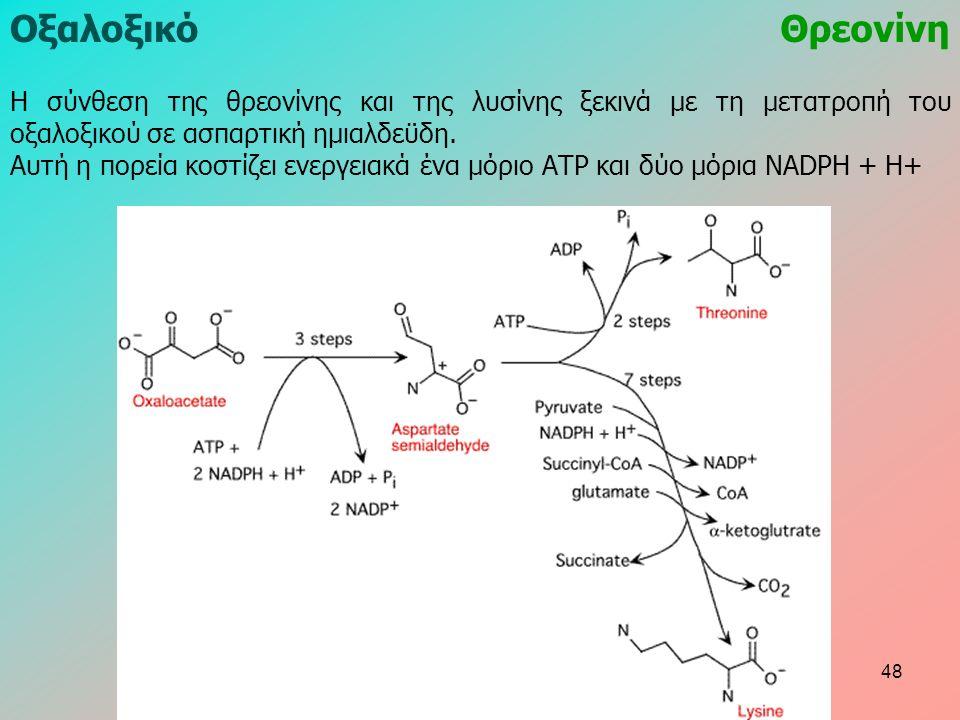 ΟξαλοξικόΘρεονίνη Η σύνθεση της θρεονίνης και της λυσίνης ξεκινά με τη μετατροπή του οξαλοξικού σε ασπαρτική ημιαλδεϋδη. Αυτή η πορεία κοστίζει ενεργε