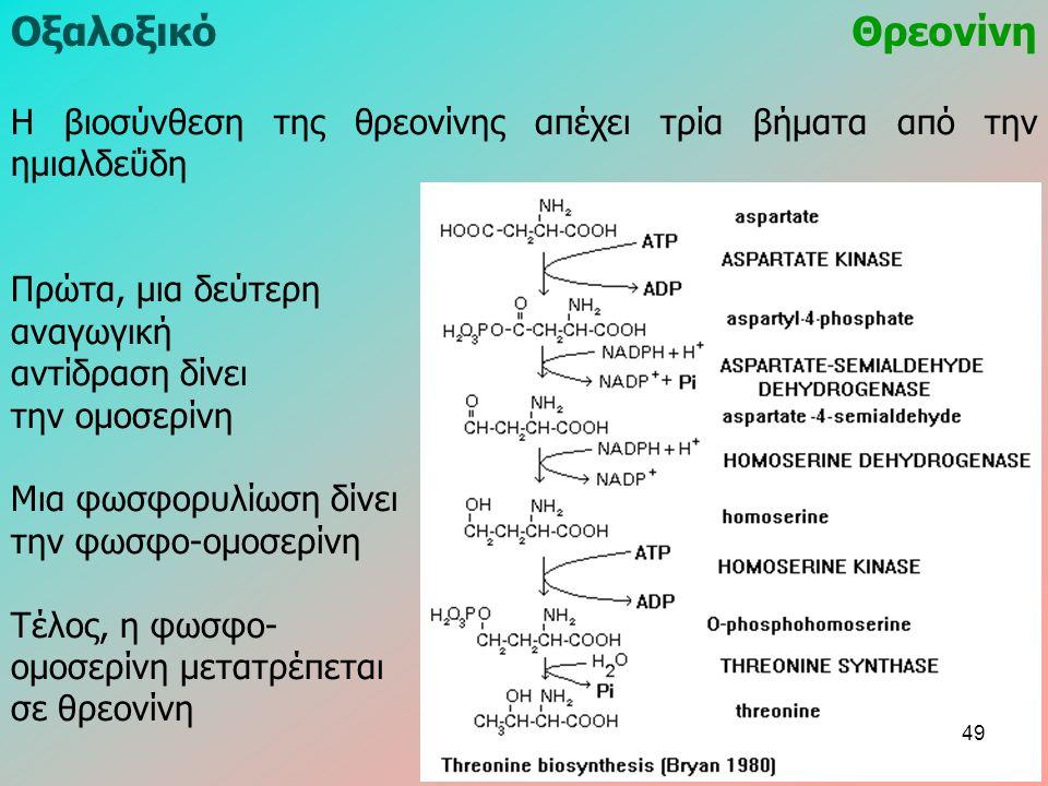 ΟξαλοξικόΘρεονίνη Η βιοσύνθεση της θρεονίνης απέχει τρία βήματα από την ημιαλδεΰδη Πρώτα, μια δεύτερη αναγωγική αντίδραση δίνει την ομοσερίνη Μια φωσφορυλίωση δίνει την φωσφο-ομοσερίνη Τέλος, η φωσφο- ομοσερίνη μετατρέπεται σε θρεονίνη 49