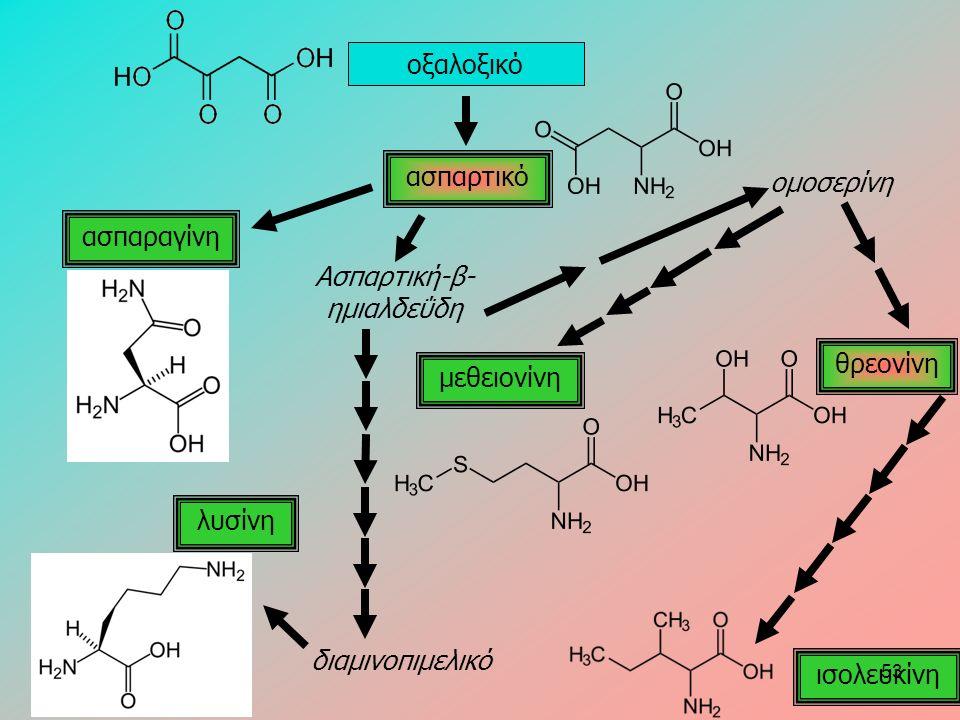 οξαλοξικό ασπαρτικό ασπαραγίνη ομοσερίνη μεθειονίνη θρεονίνη ισολευκίνη λυσίνη Ασπαρτική-β- ημιαλδεΰδη διαμινοπιμελικό 53