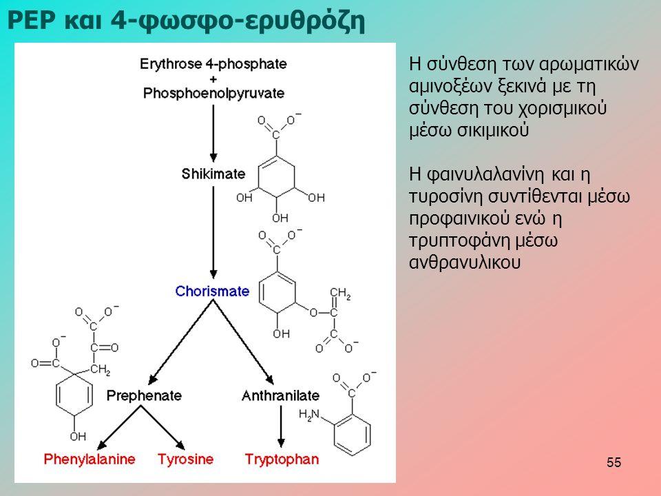 ΡΕΡ και 4-φωσφο-ερυθρόζη Η σύνθεση των αρωματικών αμινοξέων ξεκινά με τη σύνθεση του χορισμικού μέσω σικιμικού Η φαινυλαλανίνη και η τυροσίνη συντίθενται μέσω προφαινικού ενώ η τρυπτοφάνη μέσω ανθρανυλικου 55