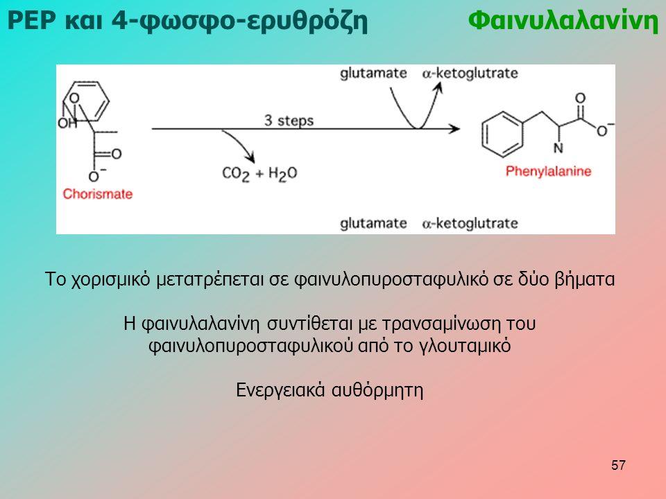 ΡΕΡ και 4-φωσφο-ερυθρόζηΦαινυλαλανίνη Το χορισμικό μετατρέπεται σε φαινυλοπυροσταφυλικό σε δύο βήματα Η φαινυλαλανίνη συντίθεται με τρανσαμίνωση του φαινυλοπυροσταφυλικού από το γλουταμικό Ενεργειακά αυθόρμητη 57