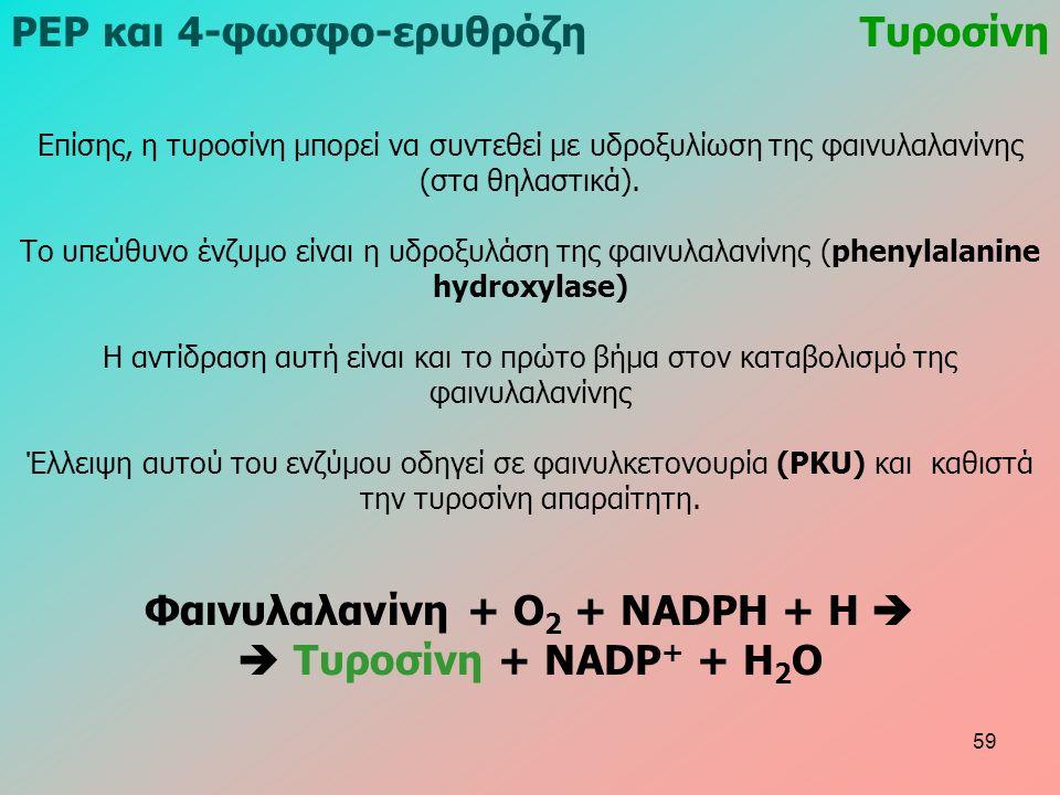 Επίσης, η τυροσίνη μπορεί να συντεθεί με υδροξυλίωση της φαινυλαλανίνης (στα θηλαστικά). Το υπεύθυνο ένζυμο είναι η υδροξυλάση της φαινυλαλανίνης (phe