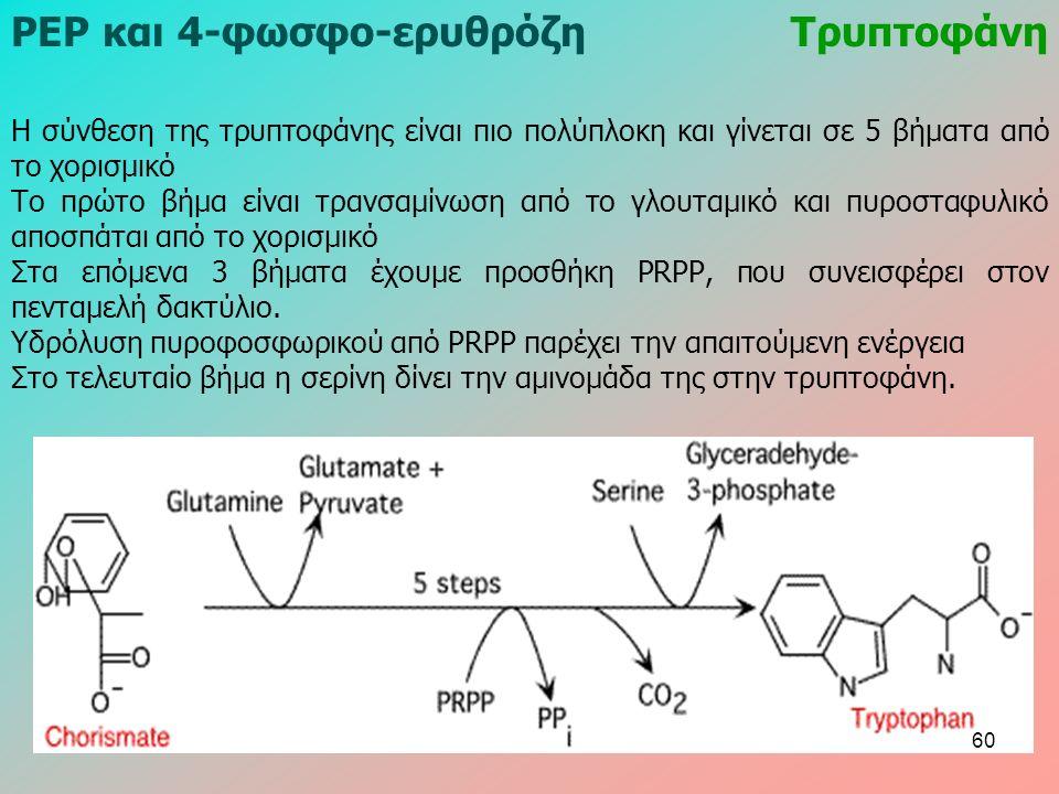 ΡΕΡ και 4-φωσφο-ερυθρόζηΤρυπτοφάνη Η σύνθεση της τρυπτοφάνης είναι πιο πολύπλοκη και γίνεται σε 5 βήματα από το χορισμικό Το πρώτο βήμα είναι τρανσαμίνωση από το γλουταμικό και πυροσταφυλικό αποσπάται από το χορισμικό Στα επόμενα 3 βήματα έχουμε προσθήκη ΡRΡΡ, που συνεισφέρει στον πενταμελή δακτύλιο.