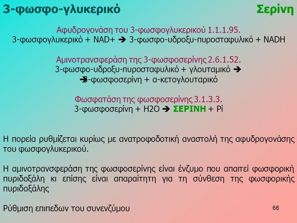 3-φωσφο-γλυκερικόΣερίνη Αφυδρογονάση του 3-φωσφογλυκερικού 1.1.1.95. 3-φωσφογλυκερικό + NAD+  3-φωσφο-υδροξυ-πυροσταφυλικό + NADH Αμινοτρανσφεράση τη