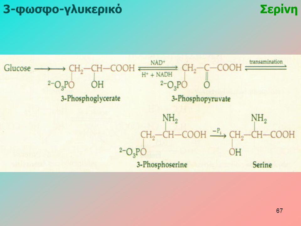 3-φωσφο-γλυκερικόΣερίνη 67