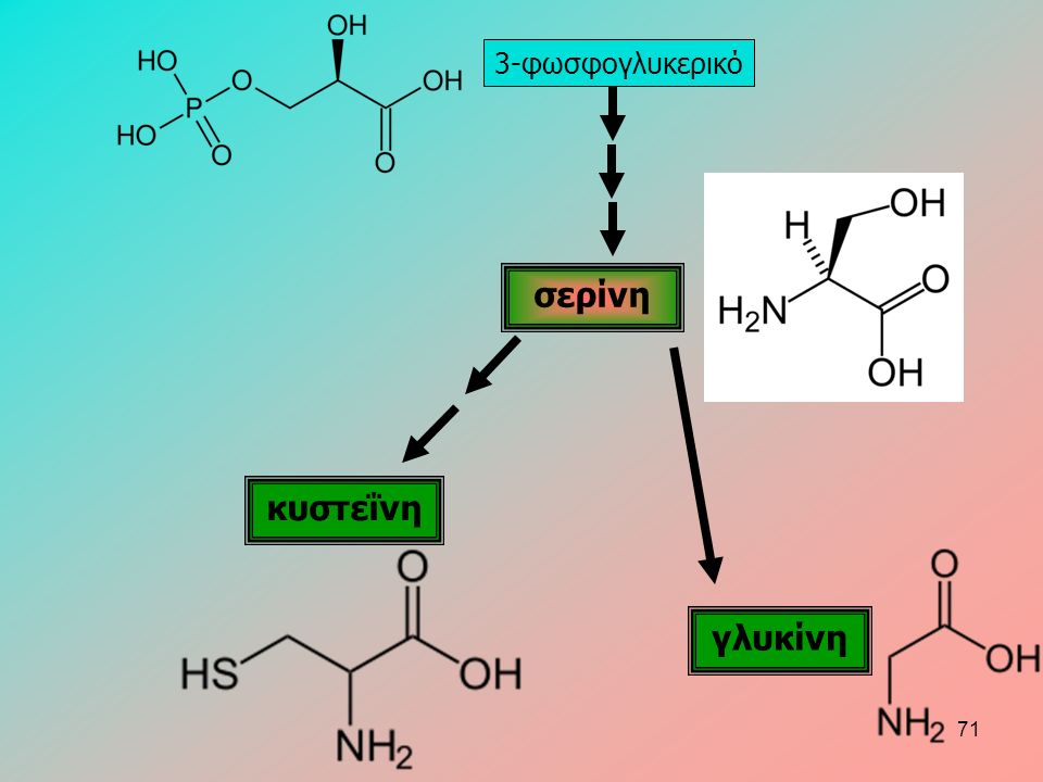 3-φωσφογλυκερικό σερίνη κυστεΐνη γλυκίνη 71