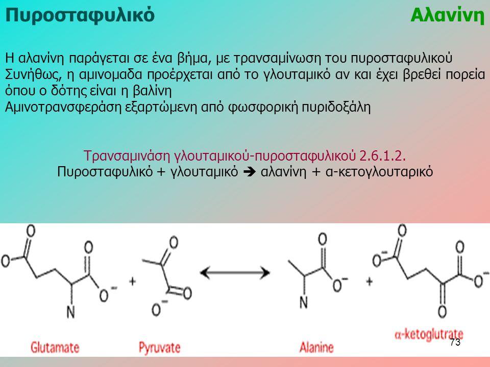 ΠυροσταφυλικόΑλανίνη Η αλανίνη παράγεται σε ένα βήμα, με τρανσαμίνωση του πυροσταφυλικού Συνήθως, η αμινομαδα προέρχεται από το γλουταμικό αν και έχει βρεθεί πορεία όπου ο δότης είναι η βαλίνη Αμινοτρανσφεράση εξαρτώμενη από φωσφορική πυριδοξάλη Τρανσαμινάση γλουταμικού-πυροσταφυλικού 2.6.1.2.