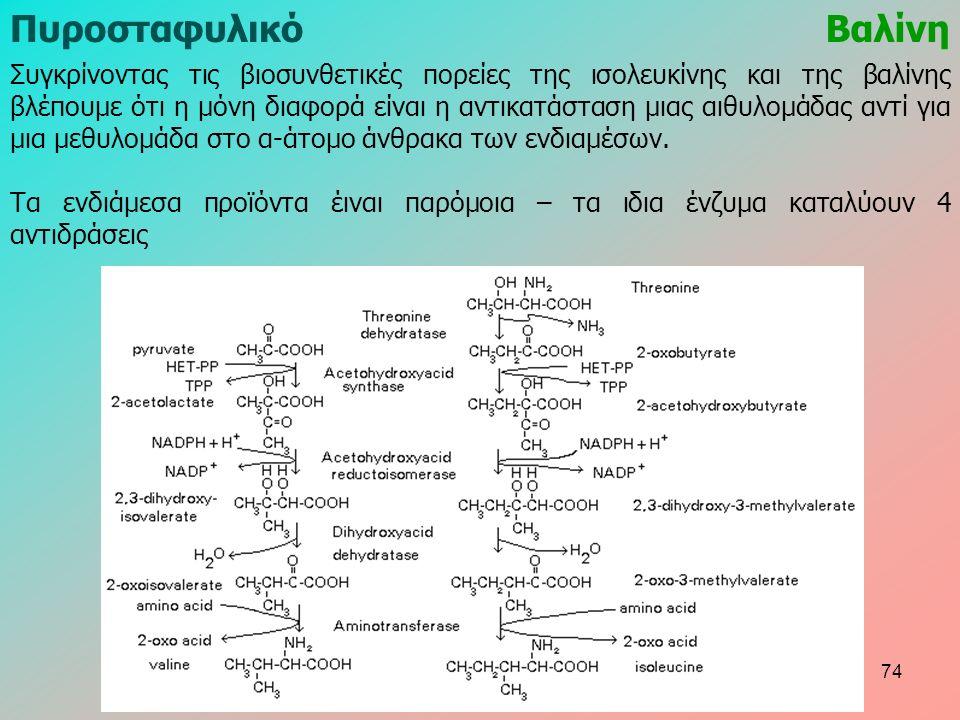 ΠυροσταφυλικόΒαλίνη Συγκρίνοντας τις βιοσυνθετικές πορείες της ισολευκίνης και της βαλίνης βλέπουμε ότι η μόνη διαφορά είναι η αντικατάσταση μιας αιθυλομάδας αντί για μια μεθυλομάδα στο α-άτομο άνθρακα των ενδιαμέσων.