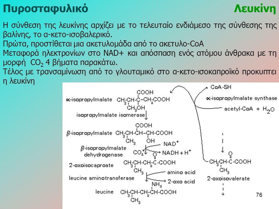 ΠυροσταφυλικόΛευκίνη Η σύνθεση της λευκίνης αρχίζει με το τελευταίο ενδιάμεσο της σύνθεσης της βαλίνης, το α-κετο-ισοβαλερικό. Πρώτα, προστίθεται μια