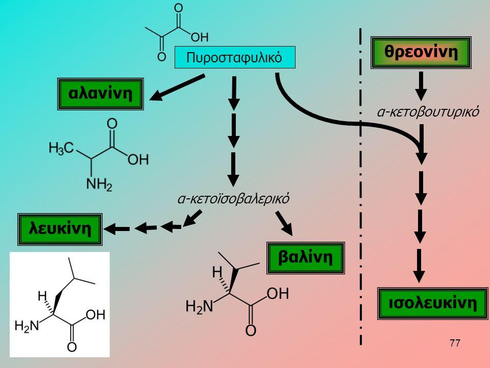 Πυροσταφυλικό αλανίνη βαλίνη ισολευκίνη θρεονίνη α-κετοβουτυρικό α-κετοϊσοβαλερικό λευκίνη 77