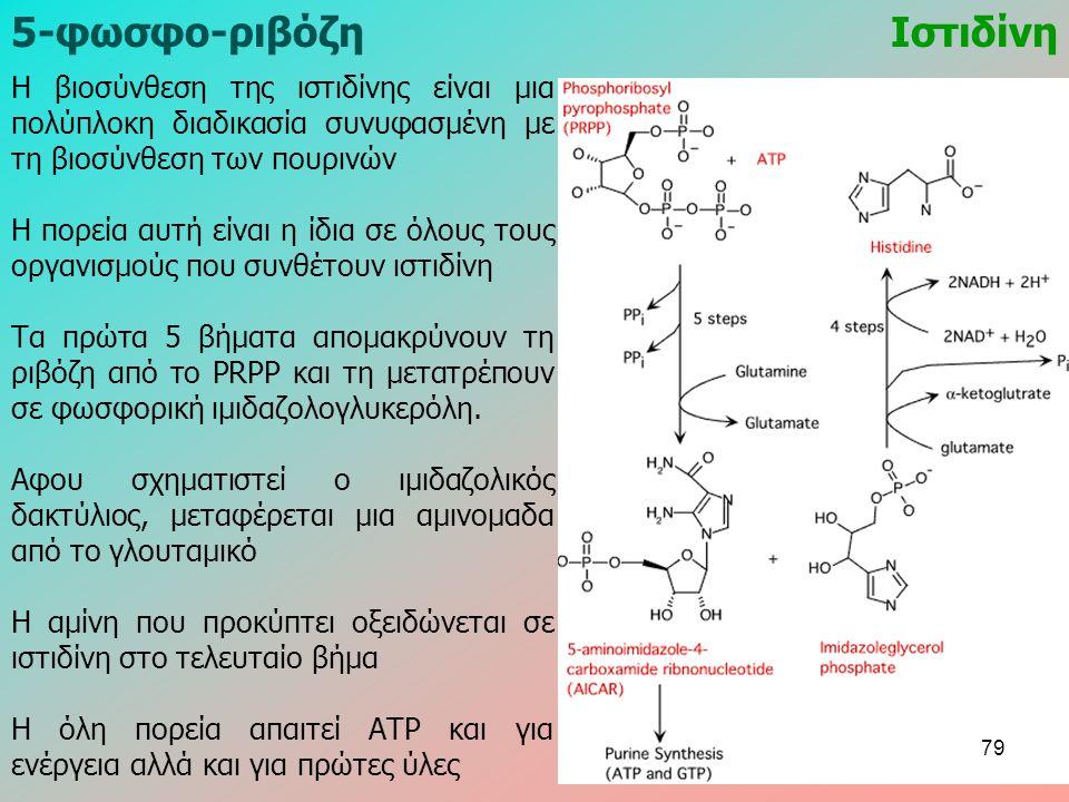 5-φωσφο-ριβόζηΙστιδίνη Η βιοσύνθεση της ιστιδίνης είναι μια πολύπλοκη διαδικασία συνυφασμένη με τη βιοσύνθεση των πουρινών Η πορεία αυτή είναι η ίδια σε όλους τους οργανισμούς που συνθέτουν ιστιδίνη Τα πρώτα 5 βήματα απομακρύνουν τη ριβόζη από το PRPP και τη μετατρέπουν σε φωσφορική ιμιδαζολογλυκερόλη.