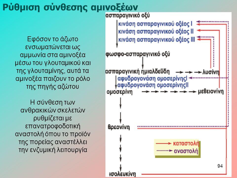 Εφόσον το άζωτο ενσωματώνεται ως αμμωνία στα αμινοξέα μέσω του γλουταμικού και της γλουταμίνης, αυτά τα αμινοξέα παιζουν το ρόλο της πηγής αζώτου Η σύνθεση των ανθρακικών σκελετών ρυθμίζεται με επανατροφοδοτική αναστολή όπου το προϊόν της πορείας αναστέλλει την ενζυμική λειτουργία Ρύθμιση σύνθεσης αμινοξέων 94