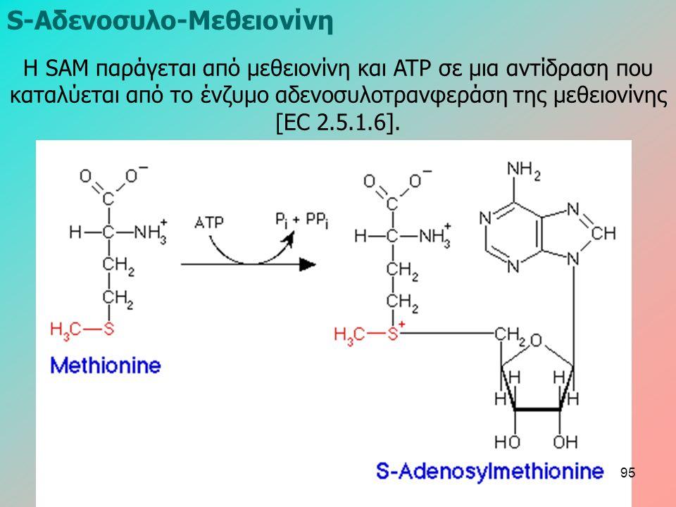 S-Aδενοσυλο-Mεθειονίνη Η SAM παράγεται από μεθειονίνη και ATP σε μια αντίδραση που καταλύεται από το ένζυμο αδενοσυλοτρανφεράση της μεθειονίνης [EC 2.5.1.6].
