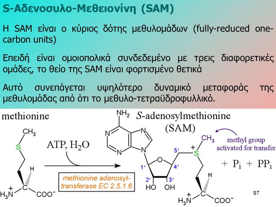 Η SAM είναι ο κύριος δότης μεθυλομάδων (fully-reduced one- carbon units) Επειδή είναι ομοιοπολικά συνδεδεμένο με τρεις διαφορετικές ομάδες, το θείο της SAM είναι φορτισμένο θετικά Αυτό συνεπάγεται υψηλότερο δυναμικό μεταφοράς της μεθυλομάδας από ότι το μεθυλο-τετραϋδροφυλλικό.