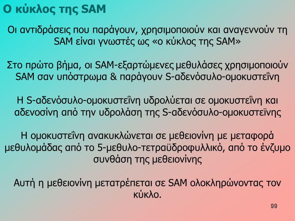 Οι αντιδράσεις που παράγουν, χρησιμοποιούν και αναγεννούν τη SAM είναι γνωστές ως «ο κύκλος της SAM» Στο πρώτο βήμα, οι SAM-εξαρτώμενες μεθυλάσες χρησιμοποιούν SAM σαν υπόστρωμα & παράγουν S-αδενόσυλο-ομοκυστεΐνη Η S-αδενόσυλο-ομοκυστεΐνη υδρολύεται σε ομοκυστεΐνη και αδενοσίνη από την υδρολάση της S-αδενόσυλο-ομοκυστεϊνης Η ομοκυστεΐνη ανακυκλώνεται σε μεθειονίνη με μεταφορά μεθυλομάδας από το 5-μεθυλο-τετραϋδροφυλλικό, από το ένζυμο συνθάση της μεθειονίνης Αυτή η μεθειονίνη μετατρέπεται σε SAM ολοκληρώνοντας τον κύκλο.