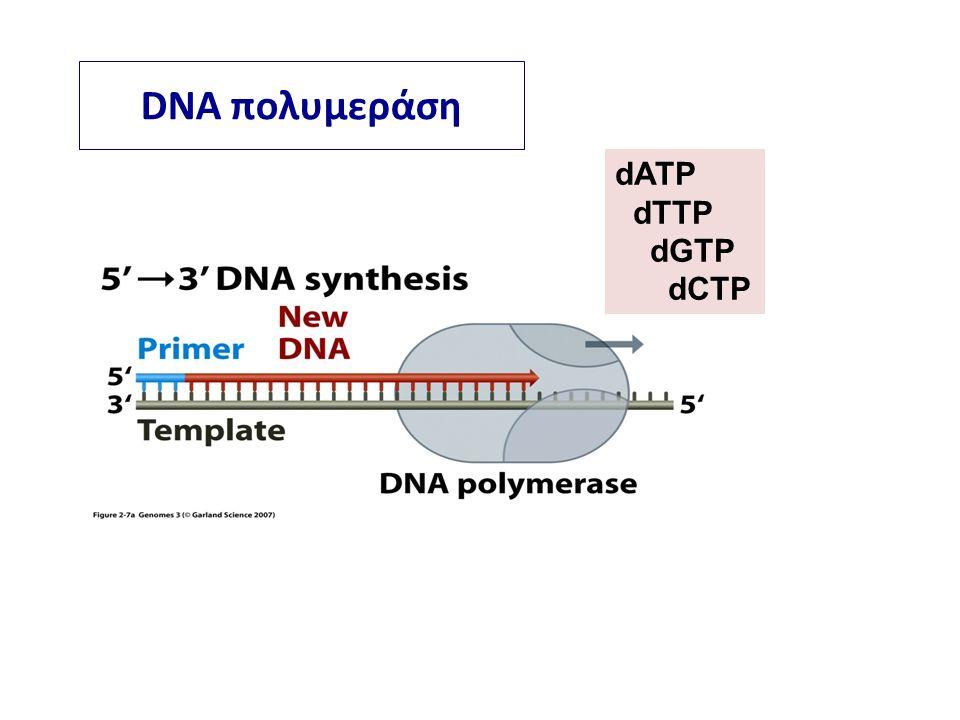 DNA πολυμεράση dATP dTTP dGTP dCTP