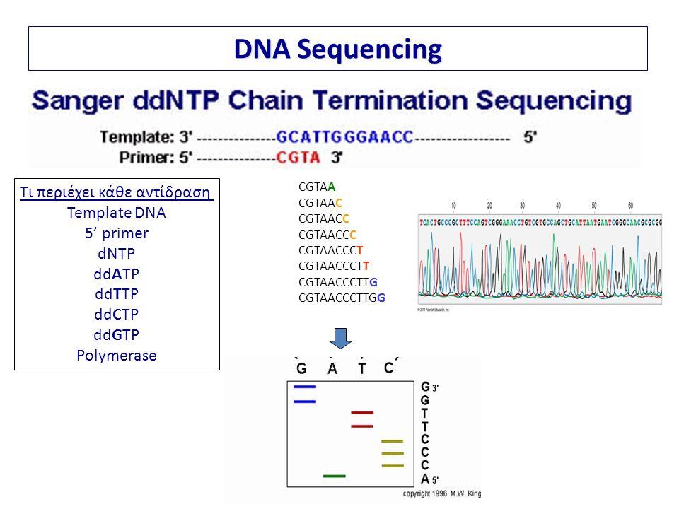 Τι περιέχει κάθε αντίδραση Template DNA 5' primer dNTP ddATP ddTTP ddCTP ddGTP Polymerase DNA Sequencing CGTAA CGTAAC CGTAACC CGTAACCC CGTAACCCT CGTAACCCTT CGTAACCCTTG CGTAACCCTTGG