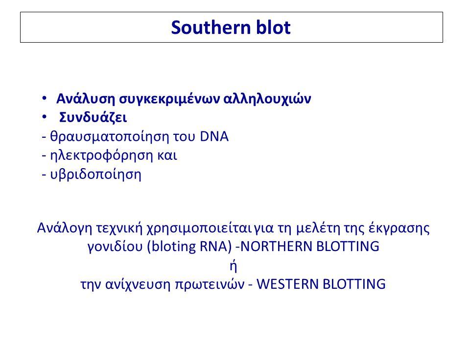 Southern blot Ανάλυση συγκεκριμένων αλληλουχιών Συνδυάζει - θραυσματοποίηση του DNA - ηλεκτροφόρηση και - υβριδοποίηση Ανάλογη τεχνική χρησιμοποιείται για τη μελέτη της έκγρασης γονιδίου (bloting RNA) -NORTHERN BLOTTING ή την ανίχνευση πρωτεινών - WESTERN BLOTTING