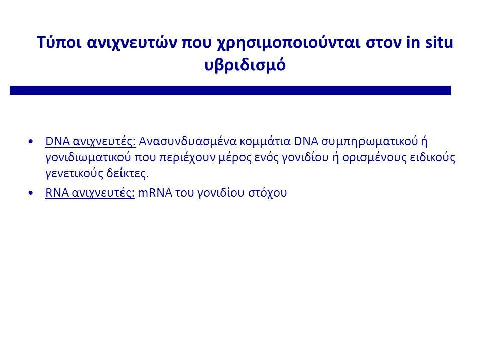 Τύποι ανιχνευτών που χρησιμοποιούνται στον in situ υβριδισμό DNA ανιχνευτές: Ανασυνδυασμένα κομμάτια DNA συμπηρωματικού ή γονιδιωματικού που περιέχουν μέρος ενός γονιδίου ή ορισμένους ειδικούς γενετικούς δείκτες.