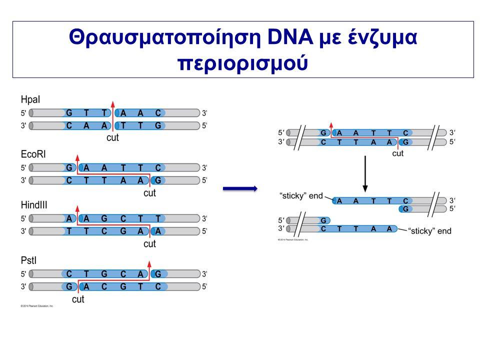 Θραυσματοποίηση DNA με ένζυμα περιορισμού