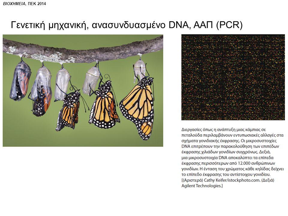 ΒΙΟΧΗΜΕΙΑ, ΠΕΚ 2014 Γενετική μηχανική, ανασυνδυασμένο DNA, ΑΑΠ (PCR)