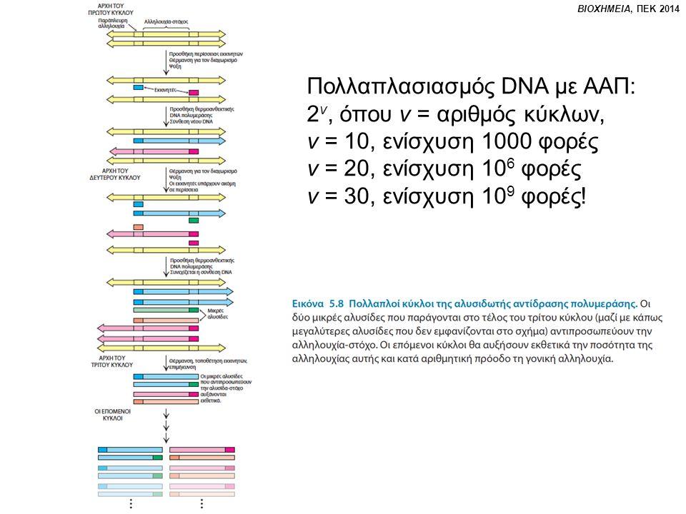 Πολλαπλασιασμός DNA με ΑΑΠ: 2 ν, όπου ν = αριθμός κύκλων, ν = 10, ενίσχυση 1000 φορές ν = 20, ενίσχυση 10 6 φορές ν = 30, ενίσχυση 10 9 φορές!