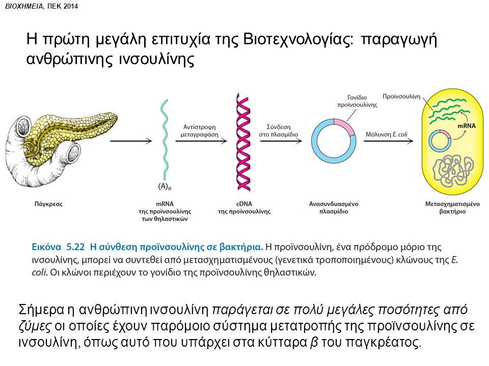 Η πρώτη μεγάλη επιτυχία της Βιοτεχνολογίας: παραγωγή ανθρώπινης ινσουλίνης Σήμερα η ανθρώπινη ινσουλίνη παράγεται σε πολύ μεγάλες ποσότητες από ζύμες οι οποίες έχουν παρόμοιο σύστημα μετατροπής της προϊνσουλίνης σε ινσουλίνη, όπως αυτό που υπάρχει στα κύτταρα β του παγκρέατος.