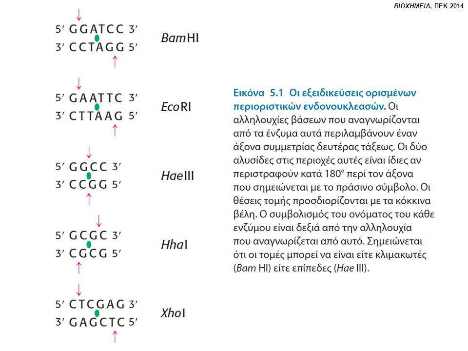 Ανακεφαλαίωση Η Βιοχημεία και η Μοριακή Βιολογία έχουν επιτρέψει στον άνθρωπο να προσδιορίσει την γονιδιακή αλληλουχία πολλών οργανισμών.