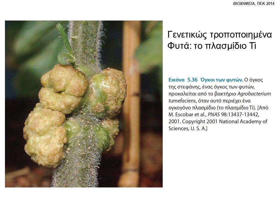 ΒΙΟΧΗΜΕΙΑ, ΠΕΚ 2014 Γενετικώς τροποποιημένα Φυτά: το πλασμίδιο Ti