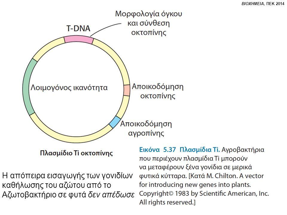 ΒΙΟΧΗΜΕΙΑ, ΠΕΚ 2014 Η απόπειρα εισαγωγής των γονιδίων καθήλωσης του αζώτου από το Αζωτοβακτήριο σε φυτά δεν απέδωσε