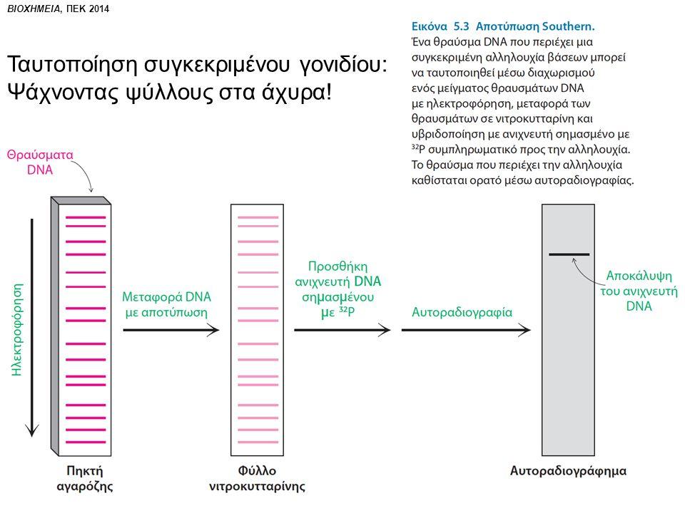 Ταυτοποίηση συγκεκριμένου γονιδίου: Ψάχνοντας ψύλλους στα άχυρα!