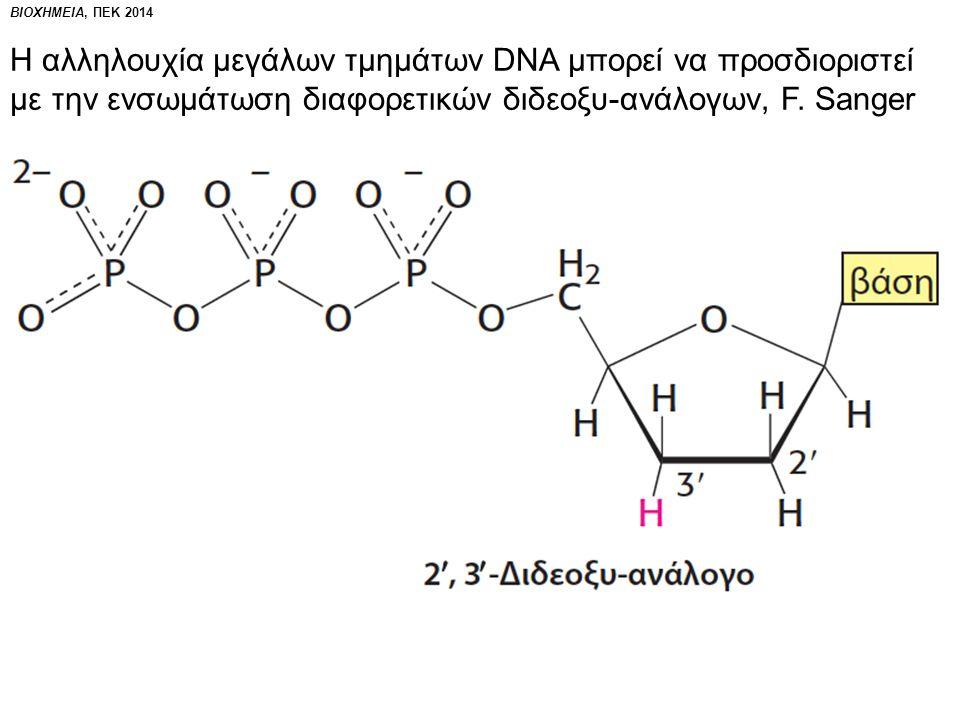 ΒΙΟΧΗΜΕΙΑ, ΠΕΚ 2014 Με τη μέθοδο Sanger κατέστη εφικτός ο προσδιορισμός της αλληλουχίας των γονιδιω- μάτων πολλών οργανισμών