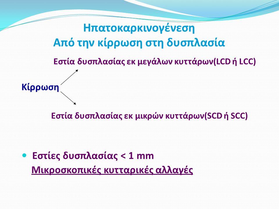 Ηπατοκαρκινογένεση Από την κίρρωση στη δυσπλασία Εστία δυσπλασίας εκ μεγάλων κυττάρων(LCD ή LCC) Κίρρωση Εστία δυσπλασίας εκ μικρών κυττάρων(SCD ή SCC) Εστίες δυσπλασίας < 1 mm Μικροσκοπικές κυτταρικές αλλαγές
