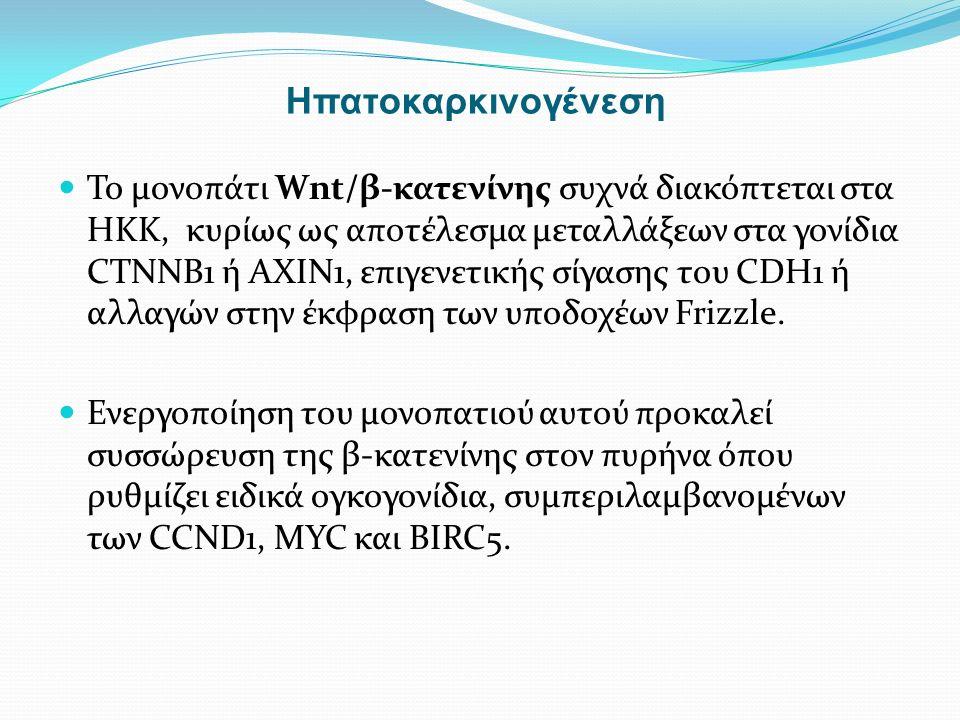 Το μονοπάτι Wnt/β-κατενίνης συχνά διακόπτεται στα ΗΚΚ, κυρίως ως αποτέλεσμα μεταλλάξεων στα γονίδια CTNNB1 ή AXIN1, επιγενετικής σίγασης του CDH1 ή αλλαγών στην έκφραση των υποδοχέων Frizzle.