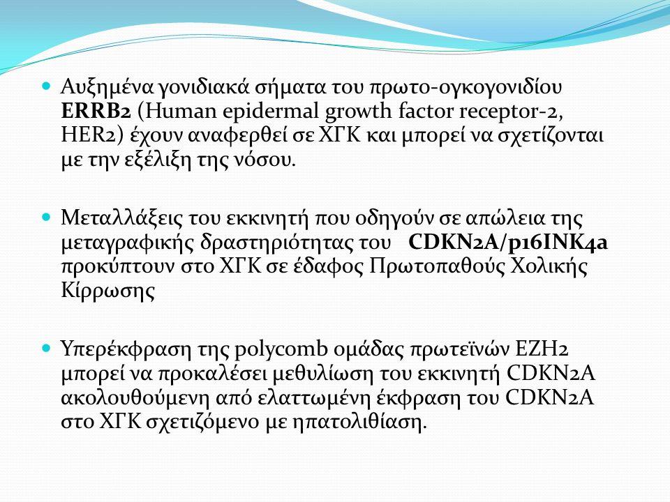 Αυξημένα γονιδιακά σήματα του πρωτο-ογκογονιδίου ERRB2 (Human epidermal growth factor receptor-2, HER2) έχουν αναφερθεί σε ΧΓΚ και μπορεί να σχετίζονται με την εξέλιξη της νόσου.