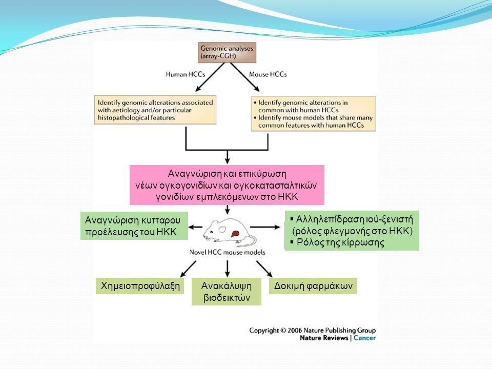 Aναγνώριση κυτταρου προέλευσης του HKK  Αλληλεπίδραση ιού-ξενιστή (ρόλος φλεγμονής στο ΗΚΚ)  Ρόλος της κίρρωσης Αναγνώριση και επικύρωση νέων ογκογονιδίων και ογκοκατασταλτικών γονιδίων εμπλεκόμενων στο ΗΚΚ ΧημειοπροφύλαξηΑνακάλυψη βιοδεικτών Δοκιμή φαρμάκων