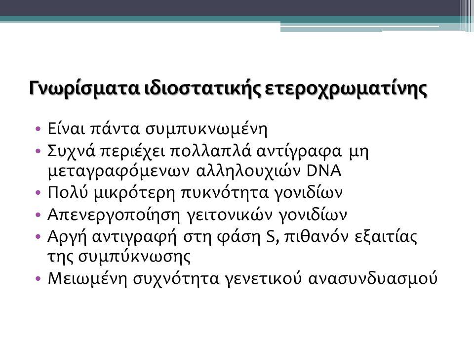 Γνωρίσματα ιδιοστατικής ετεροχρωματίνης Είναι πάντα συμπυκνωμένη Συχνά περιέχει πολλαπλά αντίγραφα μη μεταγραφόμενων αλληλουχιών DNA Πολύ μικρότερη πυκνότητα γονιδίων Απενεργοποίηση γειτονικών γονιδίων Αργή αντιγραφή στη φάση S, πιθανόν εξαιτίας της συμπύκνωσης Μειωμένη συχνότητα γενετικού ανασυνδυασμού
