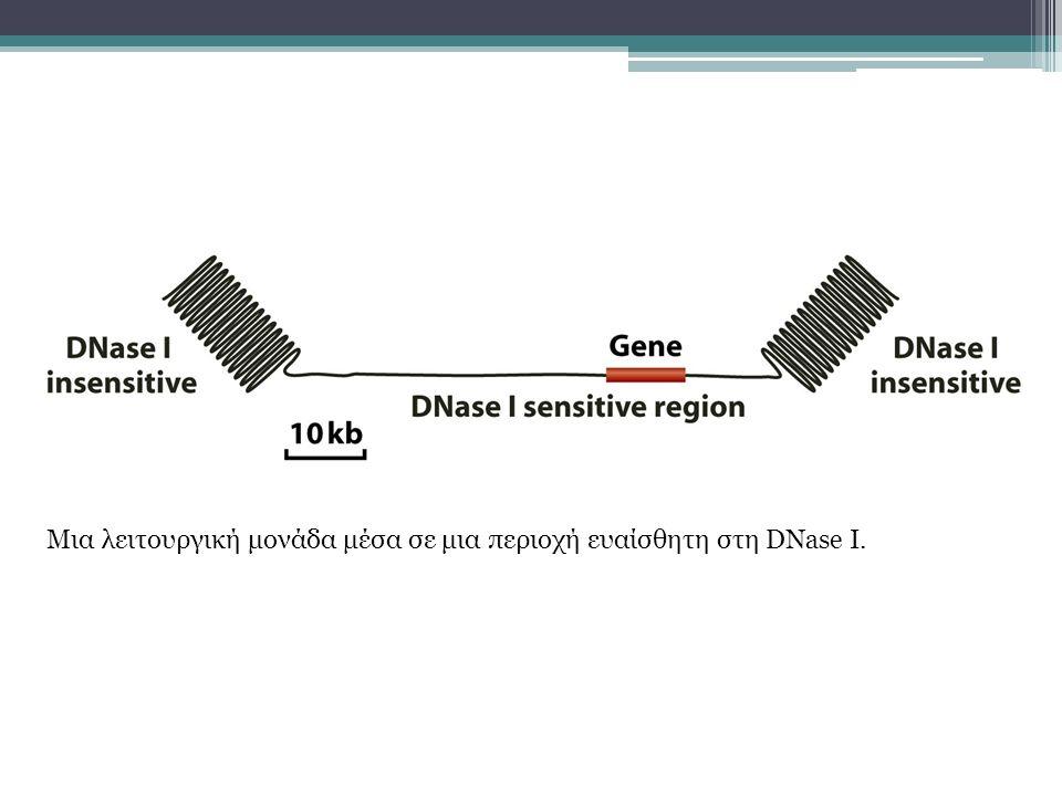 Μια λειτουργική μονάδα μέσα σε μια περιοχή ευαίσθητη στη DNase I.