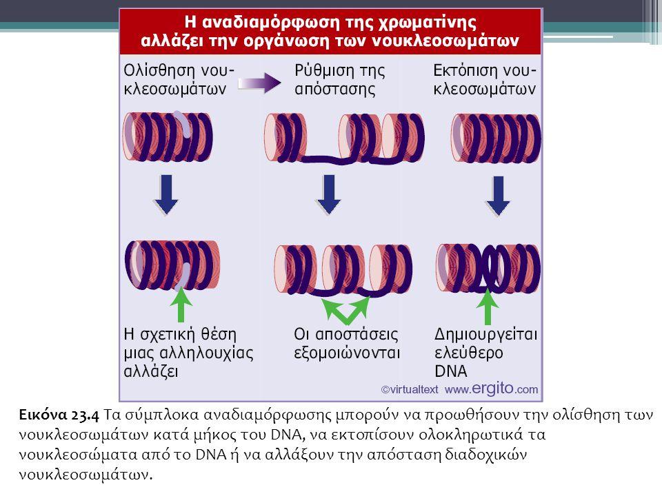 Εικόνα 23.4 Τα σύμπλοκα αναδιαμόρφωσης μπορούν να προωθήσουν την ολίσθηση των νουκλεοσωμάτων κατά μήκος του DNA, να εκτοπίσουν ολοκληρωτικά τα νουκλεοσώματα από το DNA ή να αλλάξουν την απόσταση διαδοχικών νουκλεοσωμάτων.