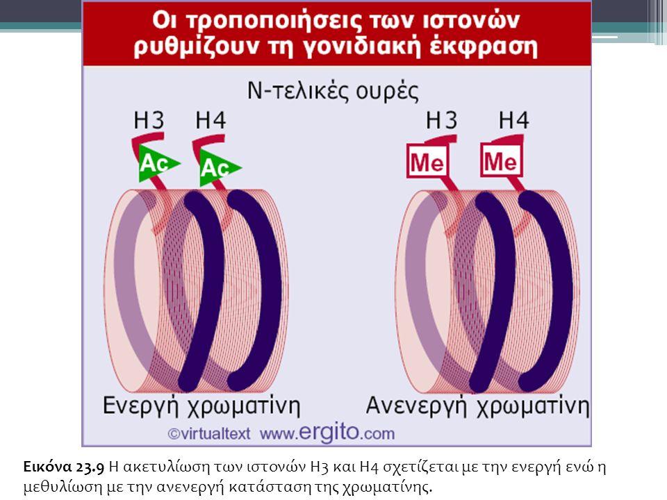 Εικόνα 23.9 Η ακετυλίωση των ιστονών H3 και H4 σχετίζεται με την ενεργή ενώ η μεθυλίωση με την ανενεργή κατάσταση της χρωματίνης.