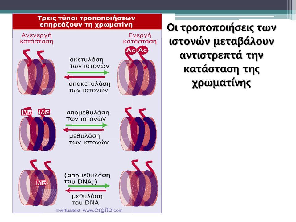 Οι τροποποιήσεις των ιστονών μεταβάλουν αντιστρεπτά την κατάσταση της χρωματίνης