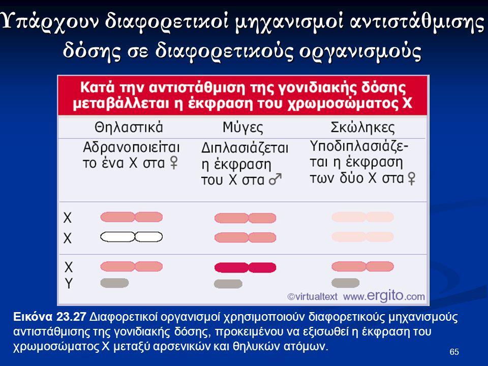 65 Εικόνα 23.27 Διαφορετικοί οργανισμοί χρησιμοποιούν διαφορετικούς μηχανισμούς αντιστάθμισης της γονιδιακής δόσης, προκειμένου να εξισωθεί η έκφραση του χρωμοσώματος X μεταξύ αρσενικών και θηλυκών ατόμων.