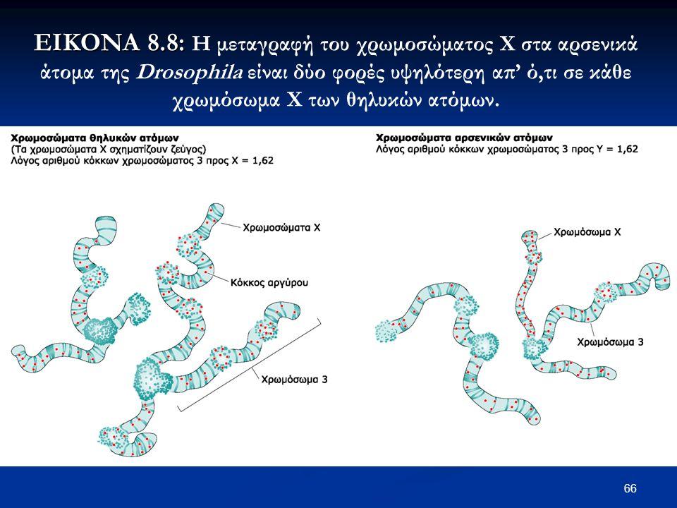 66 ΕΙΚΟΝΑ 8.8: ΕΙΚΟΝΑ 8.8: Η μεταγραφή του χρωμοσώματος Χ στα αρσενικά άτομα της Drosophila είναι δύο φορές υψηλότερη απ' ό,τι σε κάθε χρωμόσωμα Χ των θηλυκών ατόμων.